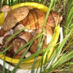 Омские грибы